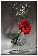 ดอกไม้สีแดง