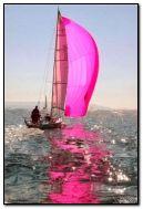velero rosado