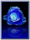 animated blue rose