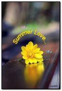 tình yêu mùa hè
