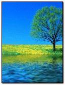 Pond live