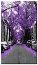 Musim luruh ungu