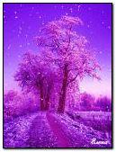 Purple Lane