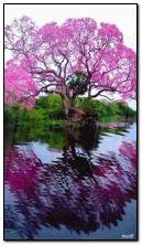 粉红色的树