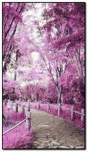 Purple spring