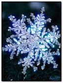 Winter beauty !