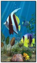点滅する魚