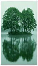 Pokok