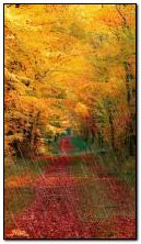 Outono-floresta