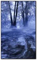 Cold winter river
