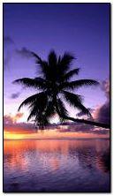 Pantai matahari terbenam
