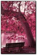 Pink Autum