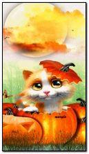 kucing halloween
