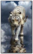Tiger im Himmel