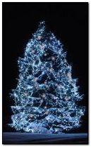 Noel ağacı