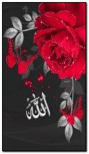 ALLAH CC伊斯兰教