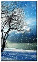 الشتاء 240 × 400