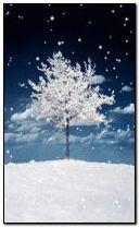 winter 240x400