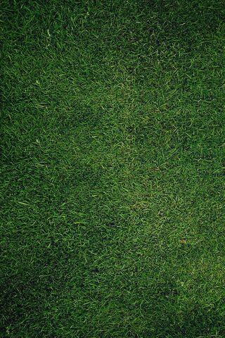 عشب اخضر