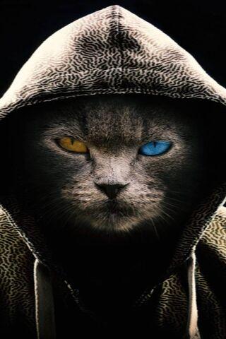 Kucing itu