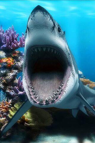 Köpekbalığı Çeneleri