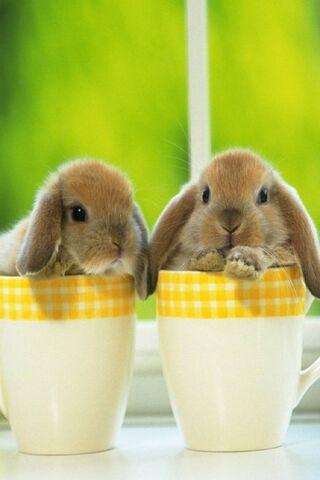 Słodki króliczek