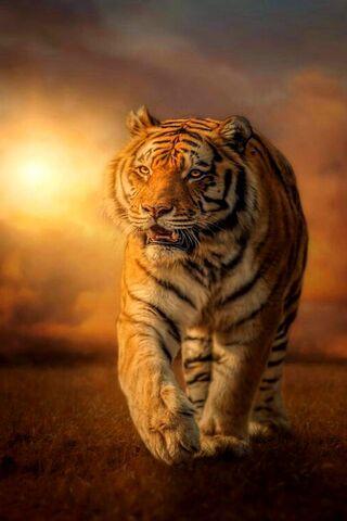 เสือเดิน