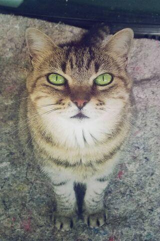 सुंदर बिल्ली