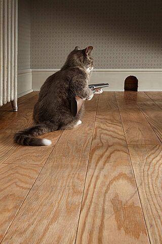 Kucing Serangan