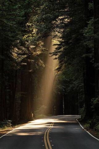 Hutan gelap