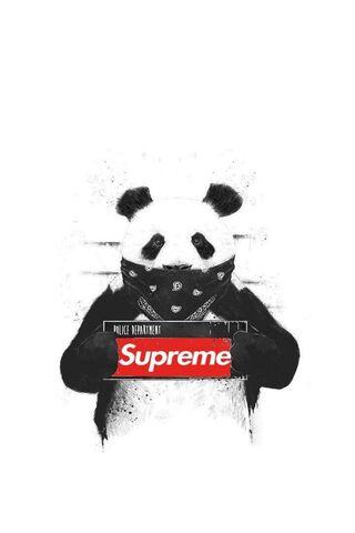 T**g Panda