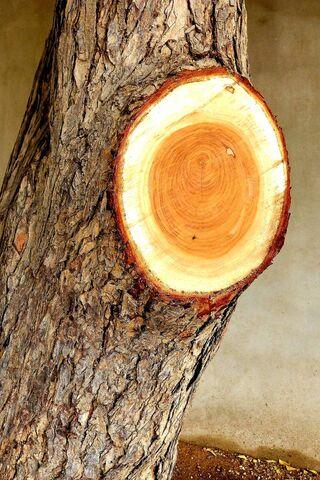 الخشب HD