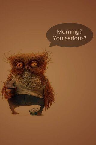 Cú buổi sáng