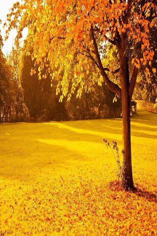 Yellow Autumn Park