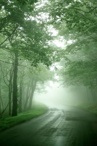 वन पेड़