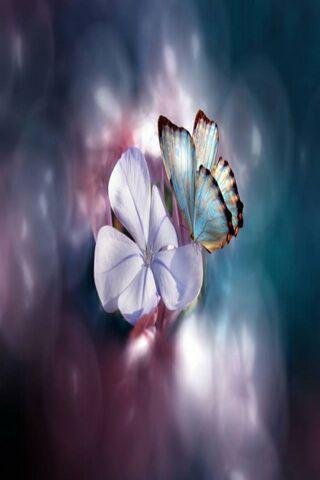 Flower Nd Butterfly