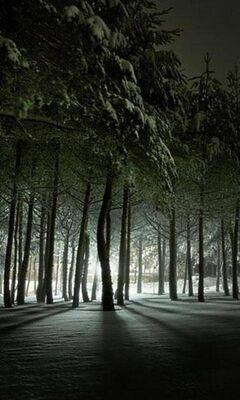 Dunkler Wald Hintergrund Lade Auf Dein Handy Von Phoneky Herunter