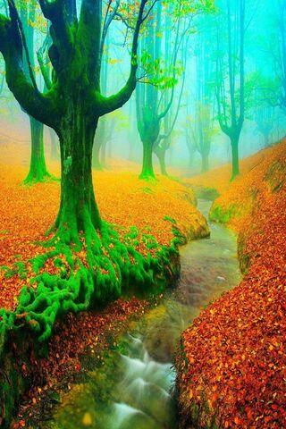Puslu sonbahar orman