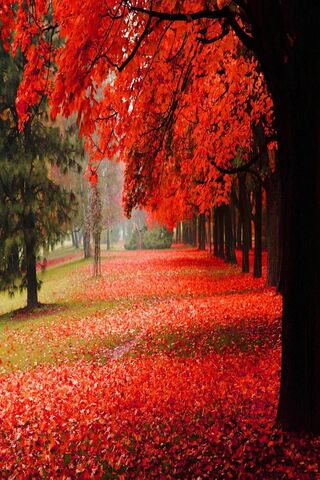 Park Autumn Red