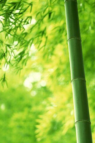 Arbre De Bambou Fond D Ecran Telecharger Sur Votre Mobile Depuis Phoneky