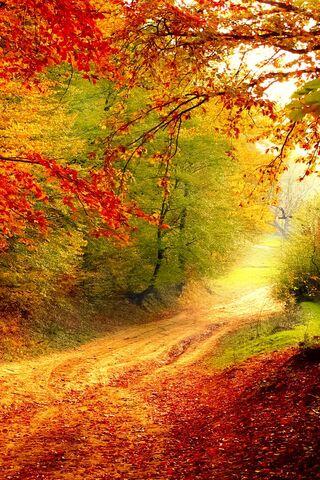 शरद ऋतु सड़क