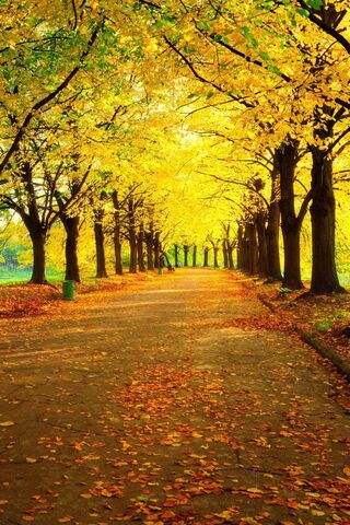 Automne HD