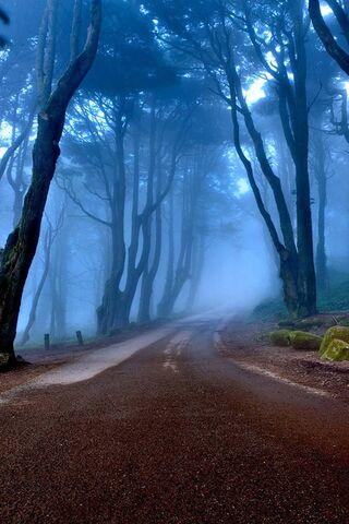 Autumn Road - Hutan
