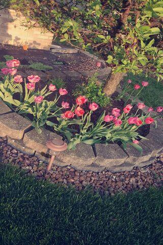 Pinkandpurpletulips