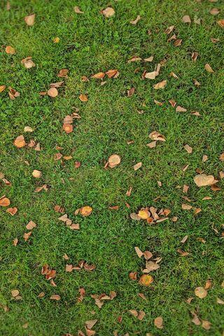 Césped de otoño