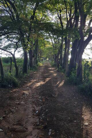 हरे जंगल