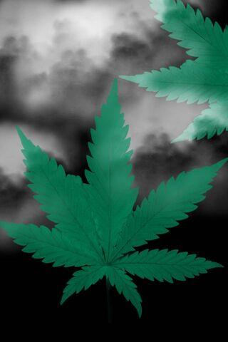 Leaf Smoke