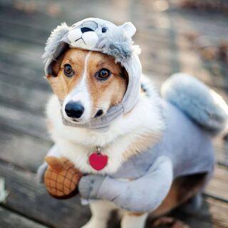 Dog Drole Fond D Ecran Telecharger Sur Votre Mobile Depuis Phoneky