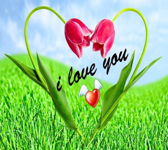 Fleurs D Amour Fond D Ecran Telecharger Sur Votre Mobile Depuis Phoneky