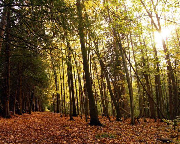 foto de Forêt d'automne Fond d'écran - Télécharger sur votre mobile depuis ...